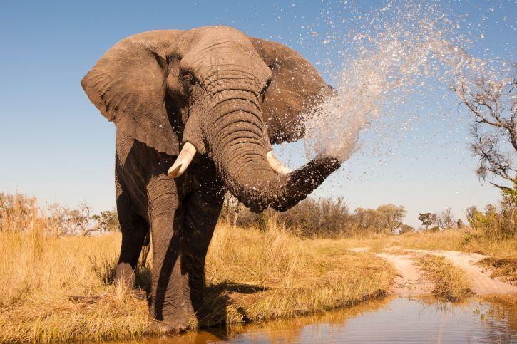 Typische Begegnung auf Botswana-Reise
