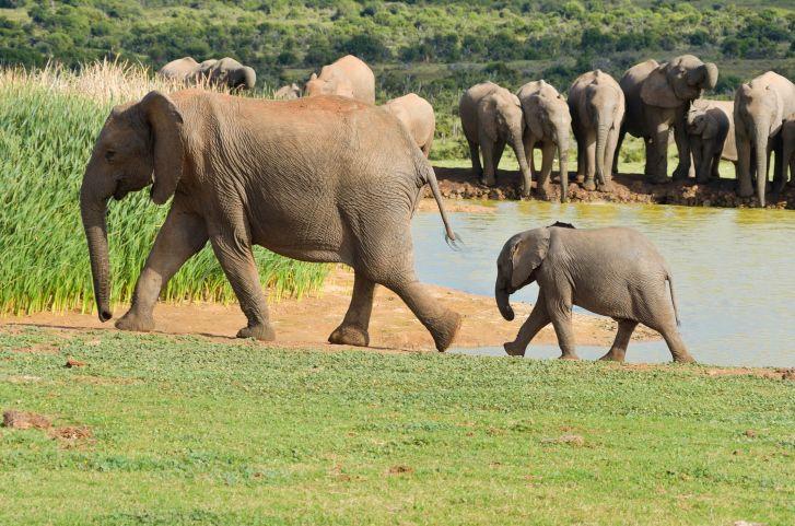 """Auch die Elefanten """"reisen"""" mit Kindern durch Botswana"""