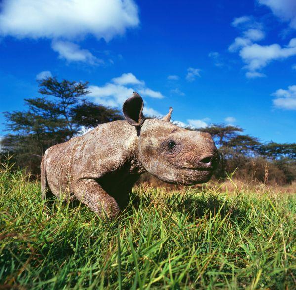 In den Nationalparks von Botswana der Tierwelt ganz nah kommen