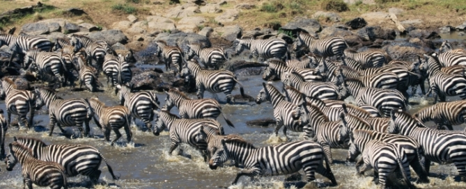 Große Migration - Kenia und Tansania