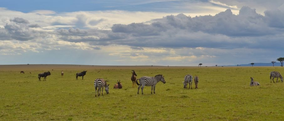 Beeindruckende Tierwelt auf Safari in Tansania