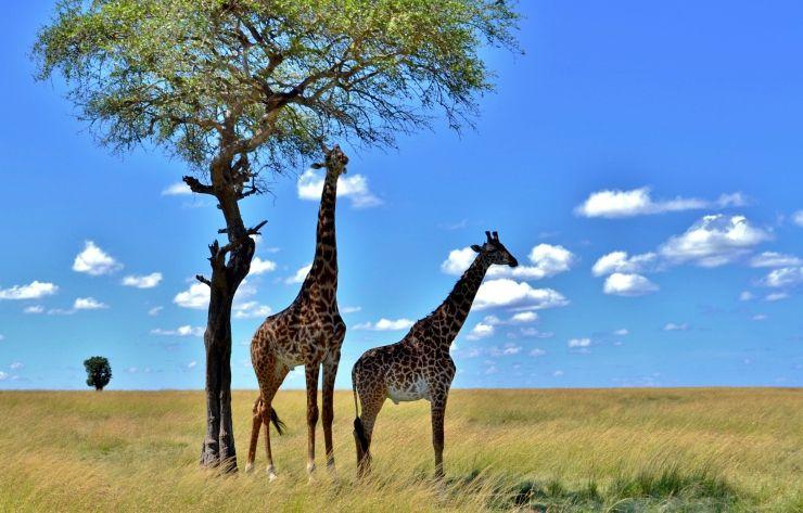 Besonders schöne Impression bei einer Rundreise auf Tansania-Safari