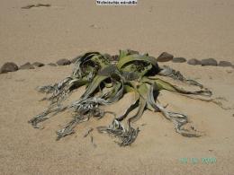 Namib Wüste  - Namibia - Reisebericht