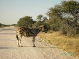 Namibia - Reise - Etosha