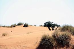 Namibia - Reisebericht - Kalahari