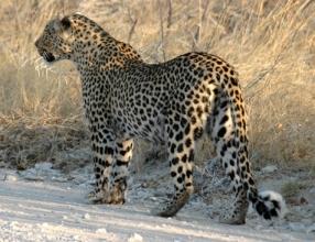 Namibia - Reise - Reisebericht