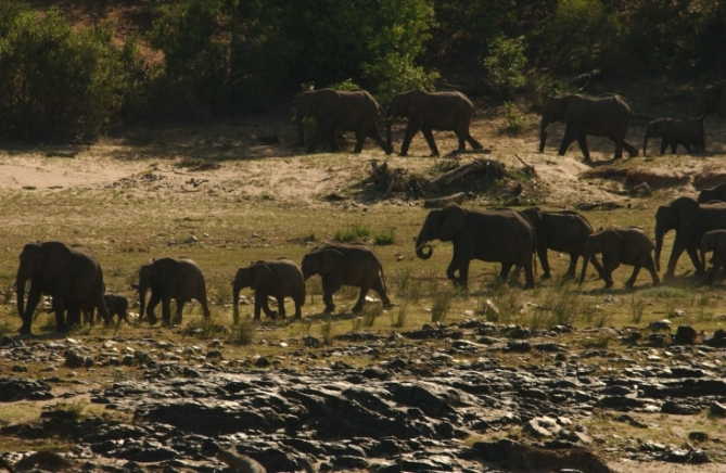 Südafrika - Reisen - Elefanten
