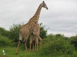Südafrika - Reisen - Krüger Nationalpark