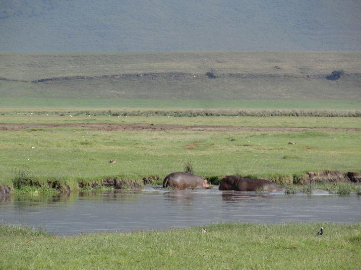 Ngorongoro Krater - Hippos
