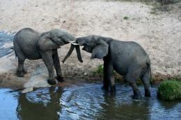 Kenia - Reisen - Safari