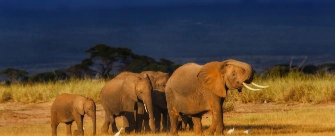 Elefantenfamilie - Kenia-Reise mit Kindern