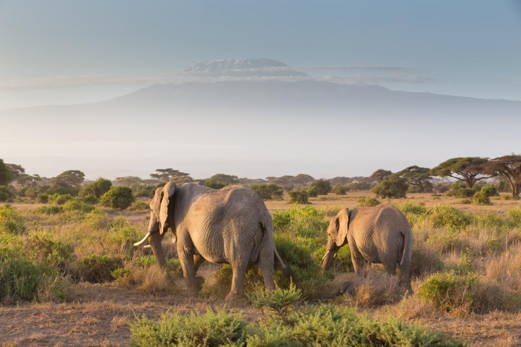 Elefanten im Amboseli Nationalpark, Kenia