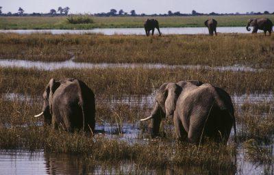 Namibia Botswana Rundreise - Elefanten im Fluss - Okavango - Botswana