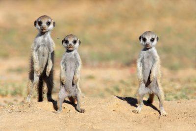 Safari Reisen Namibia