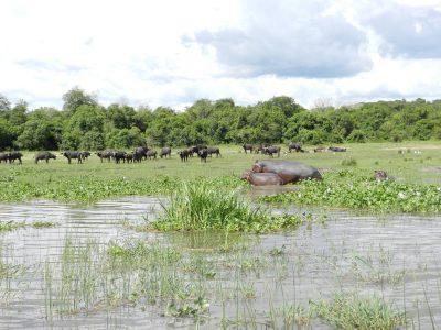 Uganda Rundreise -Bootstour - Murchinson Nationalpark - Uganda