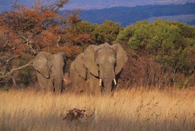 Elefanten - Garden Route Private Game Park - Suedafrika