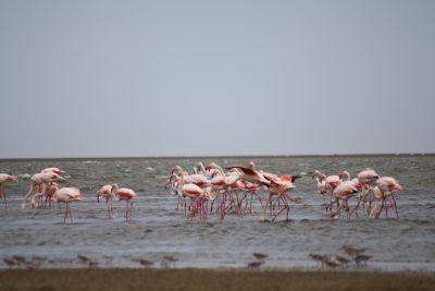Namibia Gruppenreise - Flamingos am Strand - Walvis Bay - Namibia