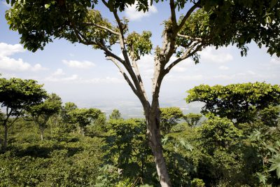Kaffeeplantage - Hochland - Nicaragua