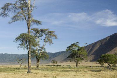 Landschaft - Ngorongoro Krater - Tansania