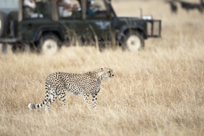 Rundreise durchs Suedliche Afrika - Namibia Selbstfahrerreise - Pirschfahrt - Chobe National Park - Botswana