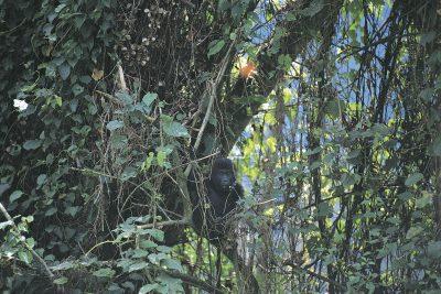 Uganda Gruppenreise - Schimpanse - Ngamba Insel - Uganda