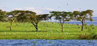 Seenlandschaft - Lake Naivasha - Kenia