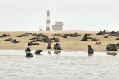 Namibia Safari - Namibia Abenteuerreise - Namibia Kleingruppenreise -Seerobben Kolonie - Walvis Bay