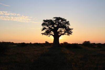 Sonnenunteragng - Chobe - Botswana