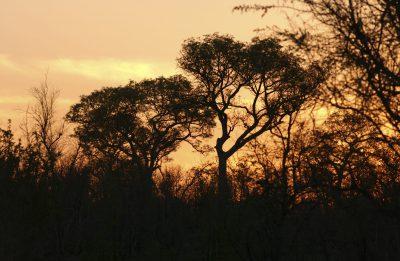 Namibia Suedafrika Rundreise - Suedafrika Gruppenreise - Sonnenuntergang - Mpumalanga - Suedafrika