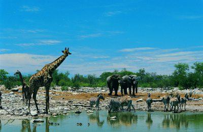 Namibia Botswana Rundreise - Wasserloch - Etosha National Park