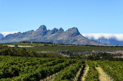 Weinanbau - Stellenbosch - Südafrika