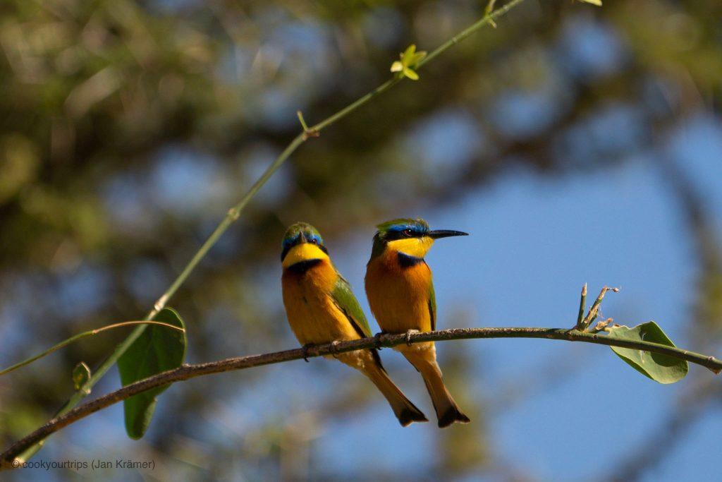 Zentrale Serengeti - Vogelbeobachtung