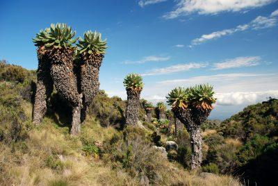 Landschaft - Mount Kilimanjaro National Park - Tansania