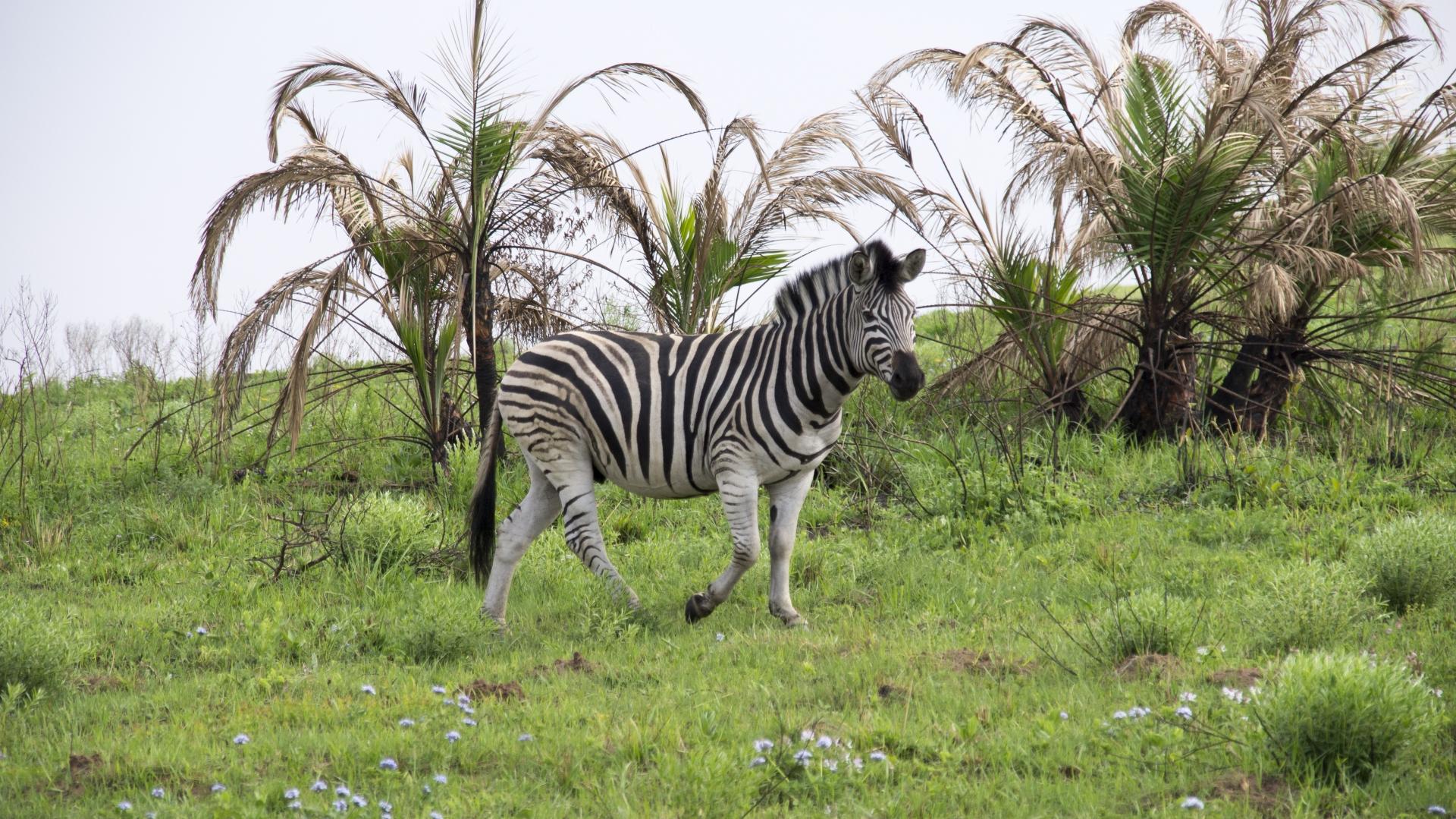 Amatikulu Nature Reserve  - Südafrika Reisebericht