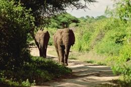 Elefanten - © Karl Scheliessnig  www.scheliessnig.at