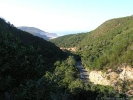 Natur im Natures Valley