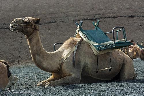 Ein Verkehrsmittel für Libyens Nationalparks
