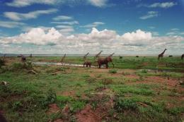 Elefanten und Giraffen ©Karl Scheliessnig  www.scheliessnig.at