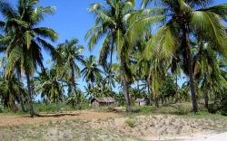 Strände in Mosambik