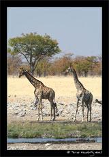 ©Marco Woschitz www.woschitz.net