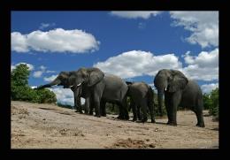 Elefanten im Addo Elephant Park ©Christian Heinrich   www.fotofeeling.de